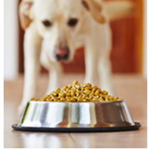Subscribe & Save Eligible - Food / Dogs: Pet Supplies
