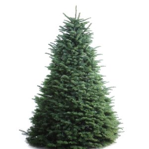 Shop 6-7-ft Fresh Noble Fir Christmas Tree at Lowes.com