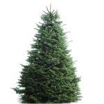 Fresh Christmas Trees Sales Event