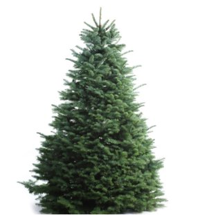 as low as $20.23Fresh Christmas Trees Sales Event