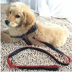 Mimibox No-pull Dog Harness Denim Traction Rope Adjustable Training Walking Combo Collar Leash for Medium/Large Dog