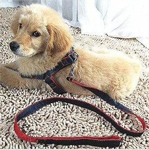 低至$13.68Mimibox 不伤狗狗颈椎的狗绑带