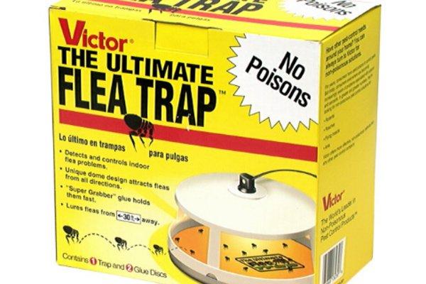 夏季杀虫装备推荐,让我们将老鼠蟑螂蚂蚁蜘蛛等等一网打尽吧!