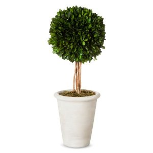 Large Boxwood Topiary Smith & Hawken™ : Target