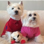 Ralph Lauren Pet Coat and sweater Sale @ Ralph Lauren