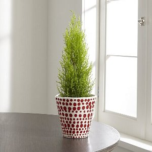 Red Dot Planter   Crate and Barrel