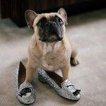CHIARA FERRAGNI  'Flirting' glitter slippers @ Farfetch