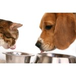 Dry Dog and Cat Food @JET