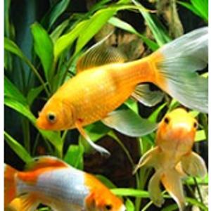Subscribe & Save Eligible - Fish & Aquatic Pets: Pet Supplies