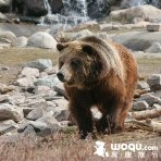 Up to 30% Off Yellowstone Sale Travel Package @ woqu.com