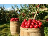 One Day Tour to Apple picking at The Hudson Valley, Brotherhood Winery etc.