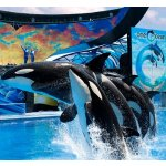 Hotel Package Sale @ SeaWorld Orlando