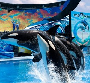 Eat Free + More! Hotel Package Sale @ SeaWorld Orlando