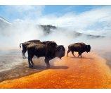 4 Day Tour to San Francisco, Los Angeles, Glen Canyon, Horseshoe Bend, Antelope Canyon, Grand Teton National Park, Yellowstone National Park, Salt Lake City, Bryce Canyon National Park, Las Vegas, Cit