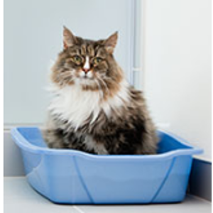 Subscribe & Save Eligible - Litter & Housebreaking / Cats: Pet Supplies