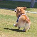 汪~汪~汪~ 人见人爱的狗儿是怎么培养出来的?