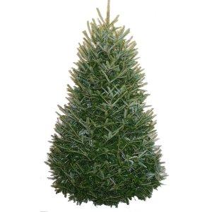 Shop 7-8-ft Fresh Fraser Fir Christmas Tree at Lowes.com