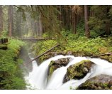 3 Day Tour to Olympic National Park, Seattle, Leavenworth, Mt. Rainier National Park etc.