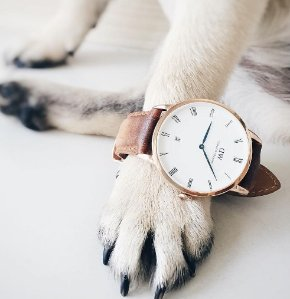 Up to Extra 20% Off Daniel Wellington Watches Purchase @ Bloomingdales