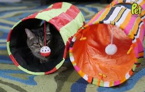 Lightning deal! Collapsible Cat Tunnel Toys (2-Pack)