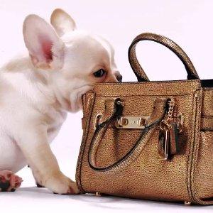Up to 72% Off Coach Handbag Sale @ 6PM.COM