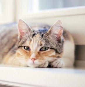 As low as $3.76 Love Kitten, Love These @ Walmart