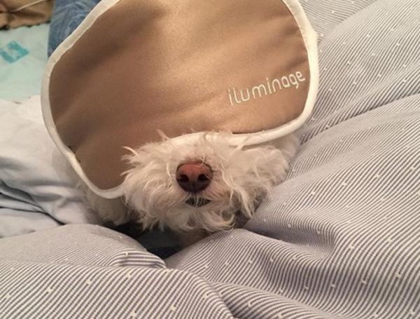 很多动物睡觉图片
