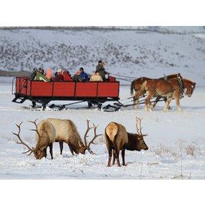 5 Day Tour to Salt Lake City, Jackson, National Elk Refuge, Snow King Mountain, Grand Teton National Park, Yellowstone National Park, Pocatello etc. [$68 OFF code:DMWYS68]