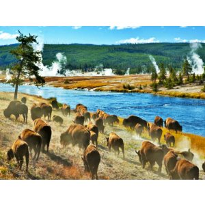 【8 Day Yellowstone National Park+Bryce Canyon Tour】