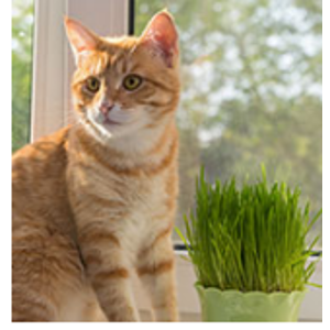 Subscribe & Save Eligible - Treats / Cats: Pet Supplies