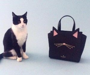 $246 jazz things up cat small hayden @ kate spade