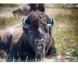 【10 Day LA+Yellowstone+Grand Teton+Antelope Canyon Tour】