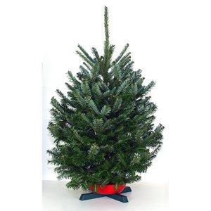 Shop 3-5-ft Fresh Fraser Fir Christmas Tree at Lowes.com