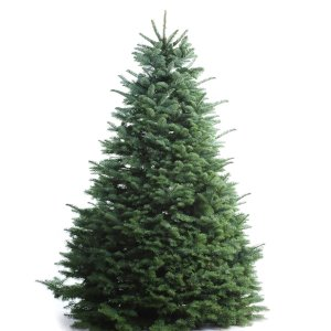 Shop 5-6-ft Fresh Noble Fir Christmas Tree at Lowes.com