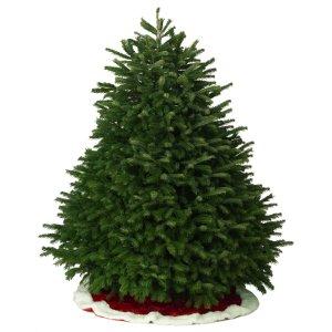 Shop 7-8-ft Fresh Nordmann Fir Christmas Tree at Lowes.com