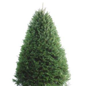 Shop 5-6-ft Fresh Douglas Fir Christmas Tree at Lowes.com