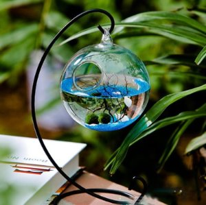 Marimo Aquarium Kit (Metal Stand) @ TheApolloBox.com