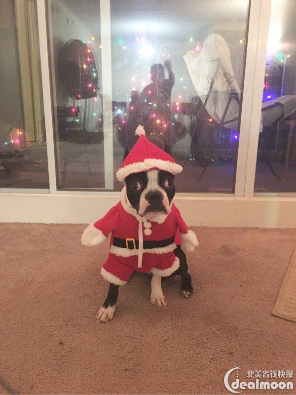 蠢萌可爱小狗子--波士顿梗以及养狗经验和须知