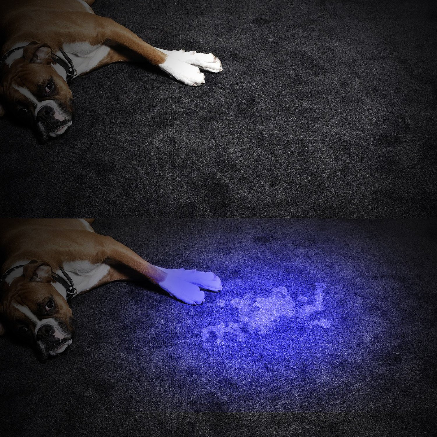 TaoTronics TT-FL001 Pets Urine and Stains Detector 12 Ultraviolet Led Flashlight with AAA Batteries