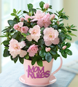 $35Mom's Tea Party Azalea Pink Plant