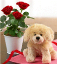 $24.99Rose Plant with Plush Puppy
