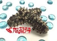 Up to 20% Off+ Free Shipping with Dried Sea Cucumber Purchase @xlseafood