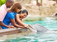 $20 OffSeaWorld Any Day Ticket