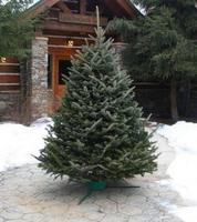 UP TO 25% Off Fresh Cut Christmas Tress @ Home Depot