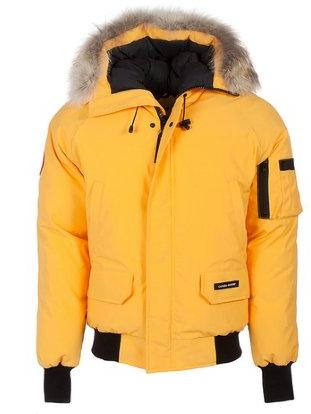 Up to 22% OffCanada Goose Designer Coats on Sale @ Belle and Clive