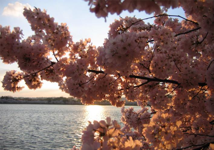From $88/personRomantic blossom-viewing 3 Day Tour @iTuxing