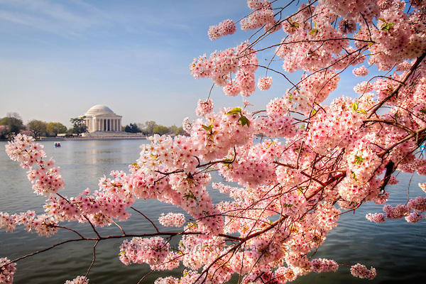 Up to 31% Off, From $88 Cherry Blossom Festival 2015 @ Lulutrip (Dealmoon Exclusive)