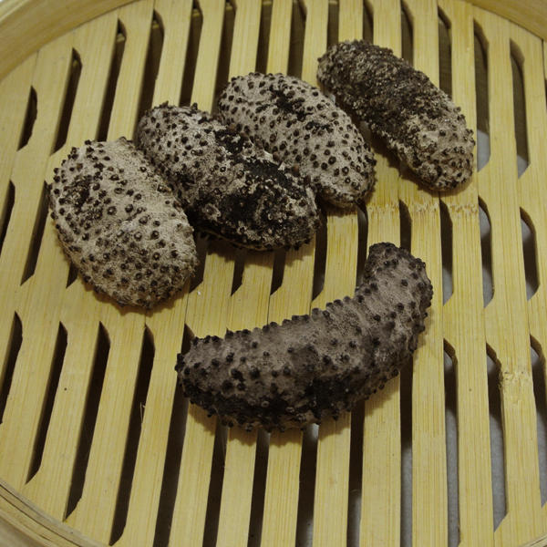 Buy 5 Get 1 FreeGalapagos sea cucumber
