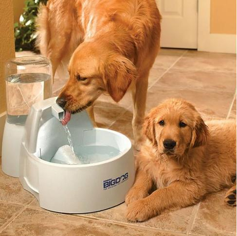 Up to 55% Off Select PetSafe Products @ Amazon.com