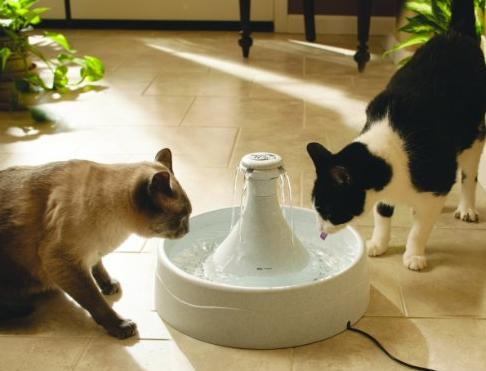 $27.8 Drinkwell 360 Fountain for Pets